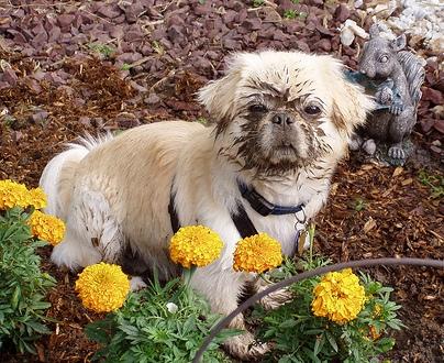 funny dog done digging