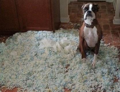 funny dog in messy kitchen