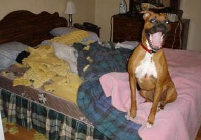 funny dog making a mess on bed