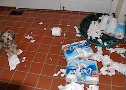 funny dog making a mess with tissue