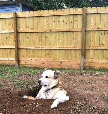 funny dog sitting in hole