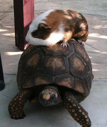hamster and turtle