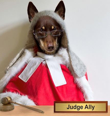 judge ally