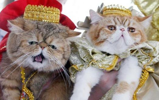 king and queen cat