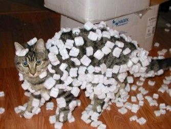 mashmallow cat