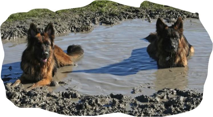 muddy shepherds