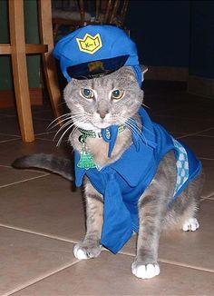 police cat2