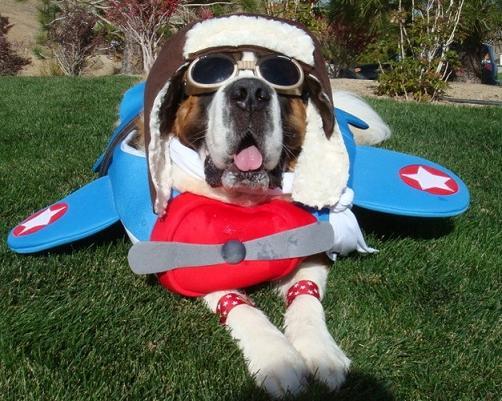 St bernard pilot