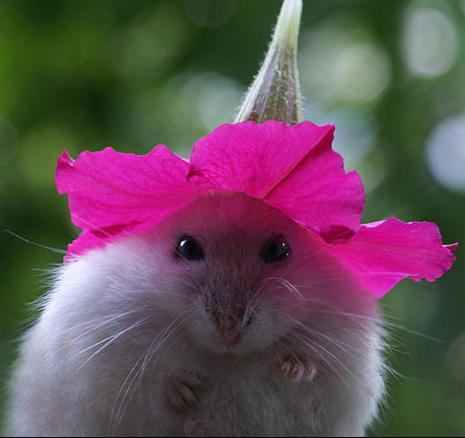 beautiful mouse