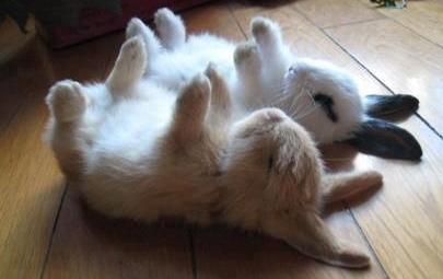 bunnies lying still