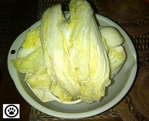 cabbage soaked & drained