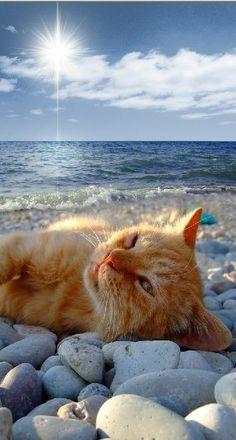 cat at the beach-2