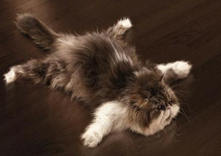 cat lying still