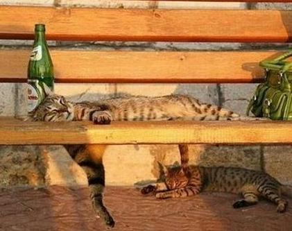 cats chilling