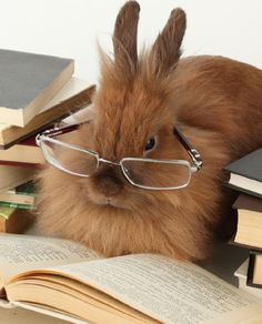 cute bunny reading