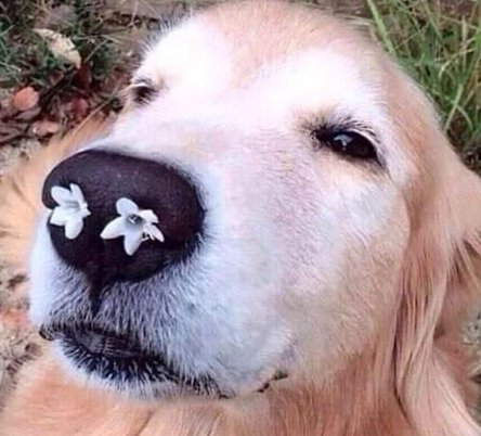 cute dog with flowers on nose