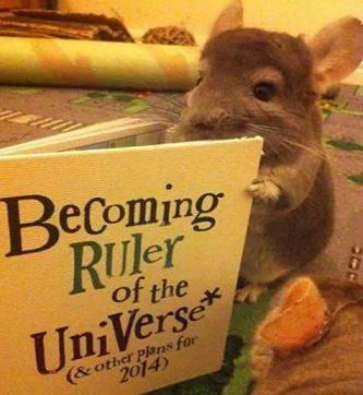 cute rat reading