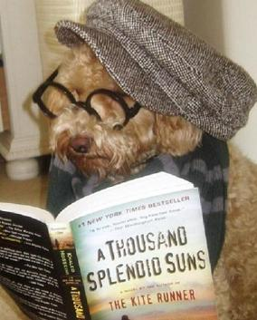 dog reading the kite runner