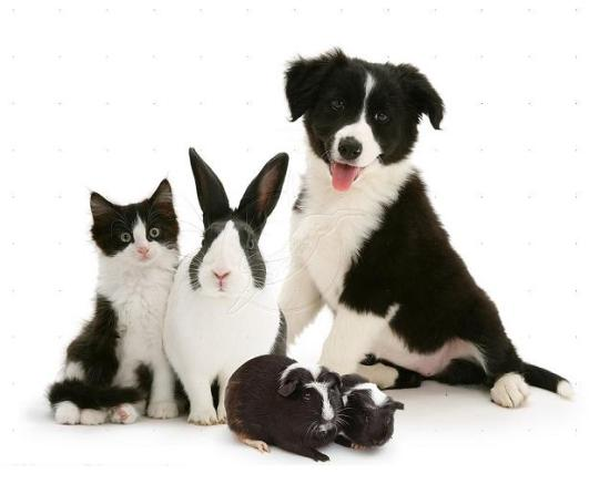 funny animals black and white