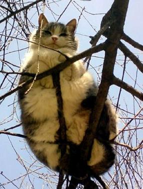 funny cat on a tree