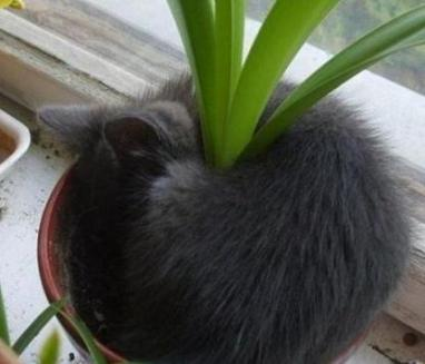 funny cat sleeping in pot