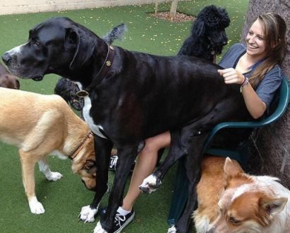 lap dog-2
