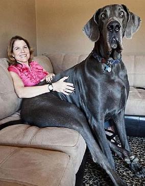 lap dog-8