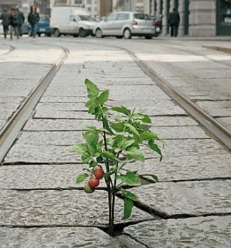 plant growing from crack pavement