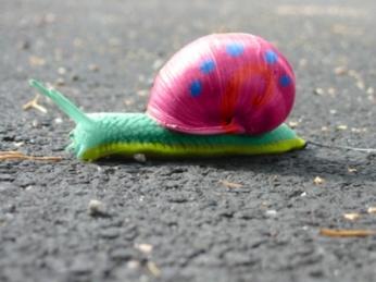 pretty snail
