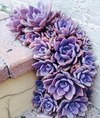 purple-flower-growing-concrete
