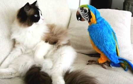 cat and parrot-2
