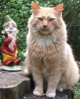 cat-gardens-gnome (2)
