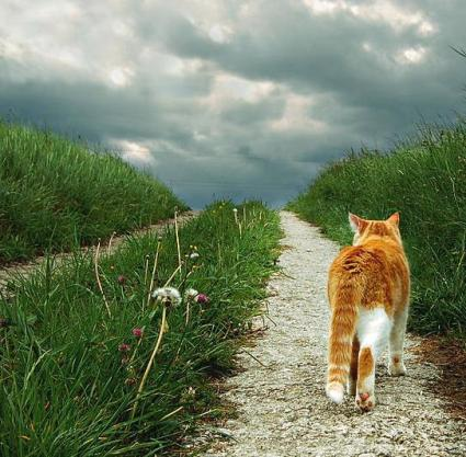 cat on a path -2.jpg