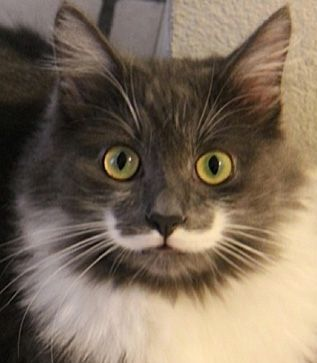 cat with mustache-1