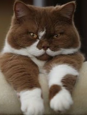 cat with mustache-2