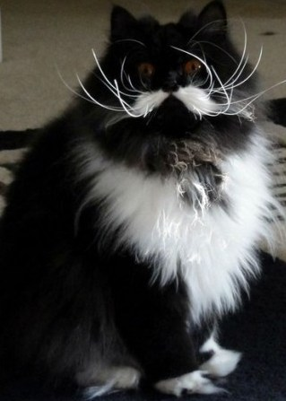 cat with mustache-3