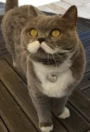 cat with mustache- 6