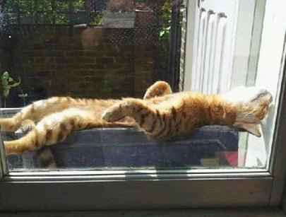 cats enjoying the sun