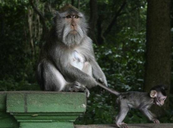 controlling monkeys