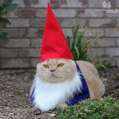 cute cat gnome