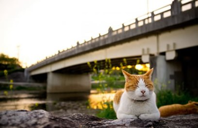 cute cat meditating