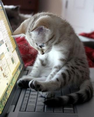cute cat on keyboard
