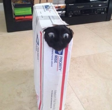 cute cat stuck on box-5