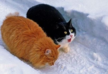 cute cats making a path