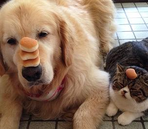 cute dog and cat best friends.jpg