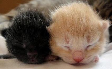 cute newborn kittens
