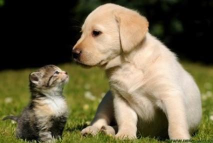cute puppy and kitten.jpg