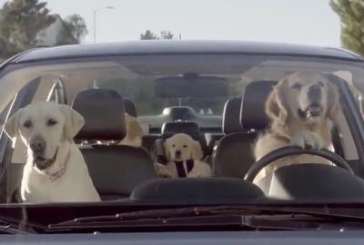 dog driving-5