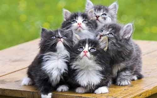funny kittens looking up
