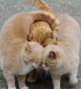 kittens hugging